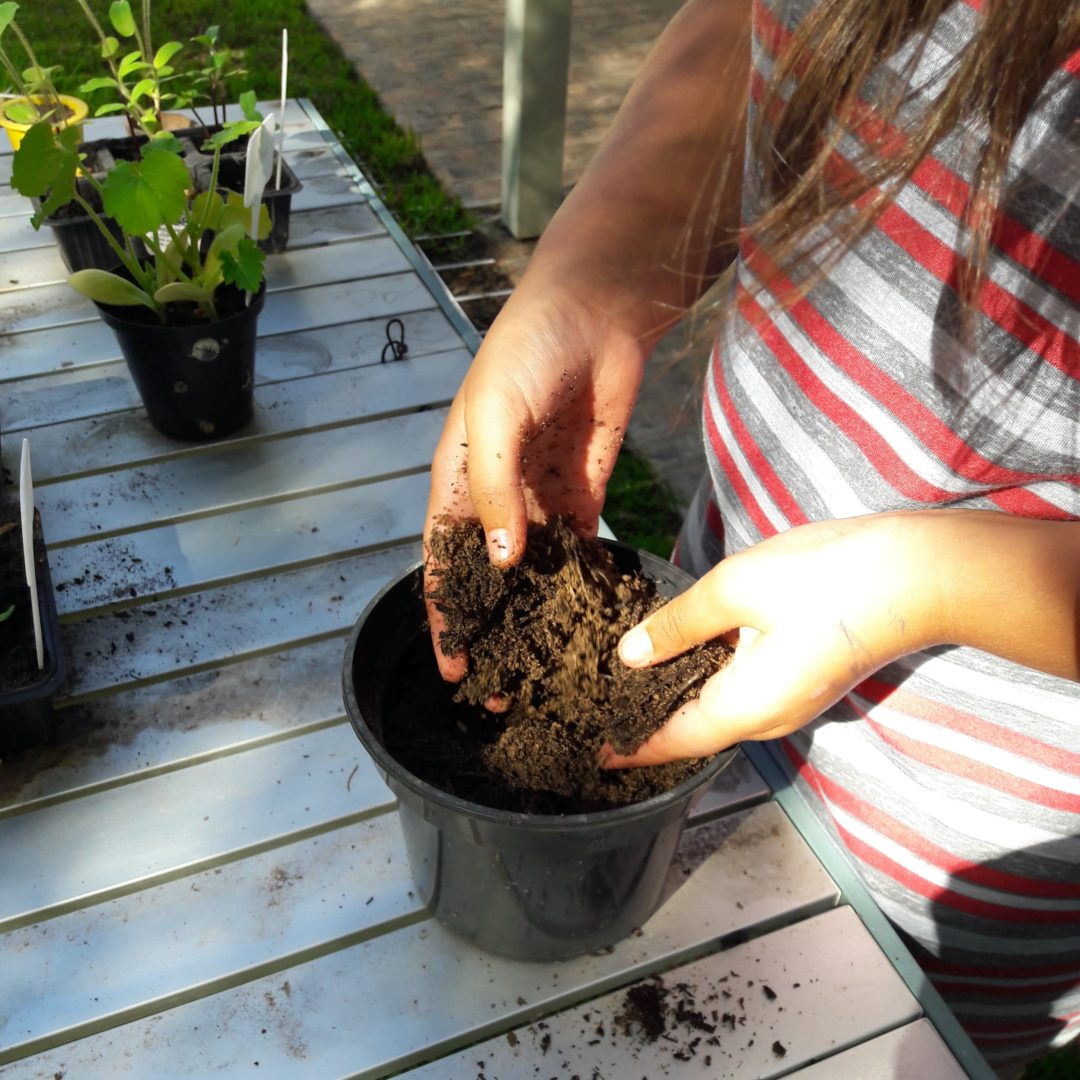 planting sunflowers mindfully